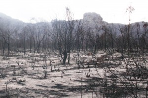 Grampians 1 Mountain range after 2013:14 fire