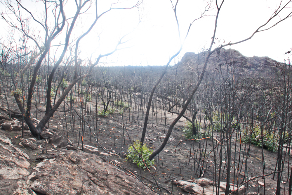 Grampians 1 Regrowth after 2013:14 fire